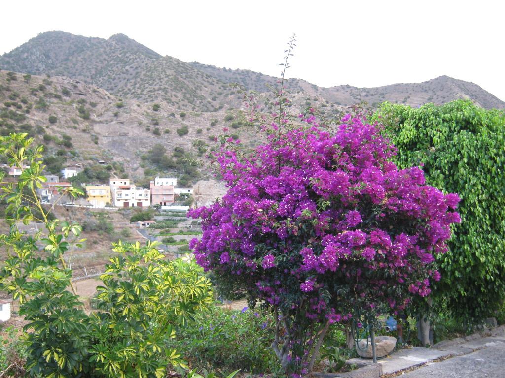 Vallehermoso - auf der Wanderung 2