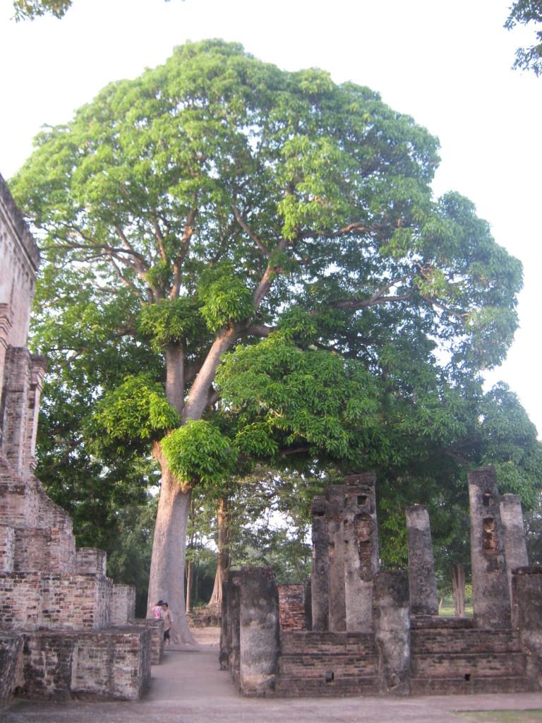 Old Sukothai IX