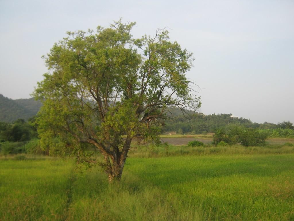 Zug nach Nakhon Phatom Blick aus dem Fenster
