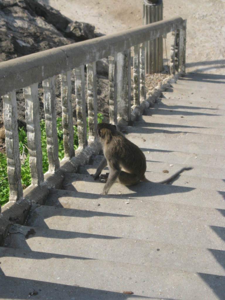 Prachuat K. K. Die Affen I