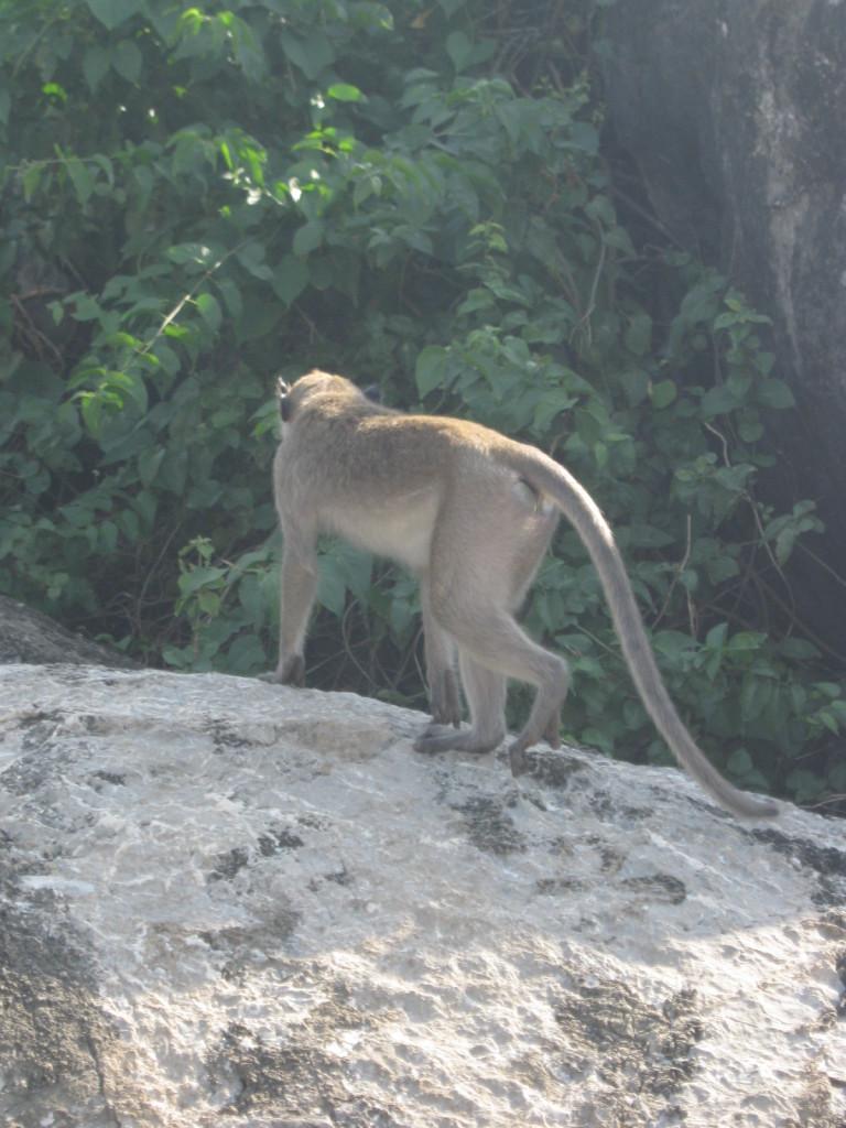 Prachuat K. K. Die Affen  II