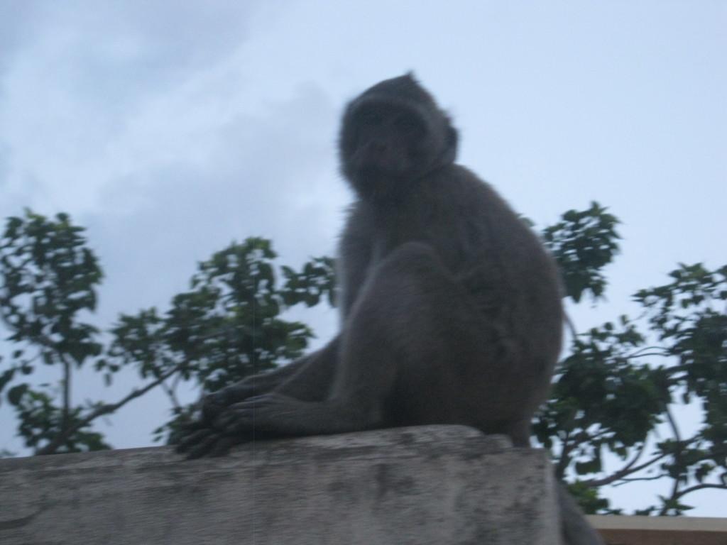 Prachuat K. K. Die Affen  VI