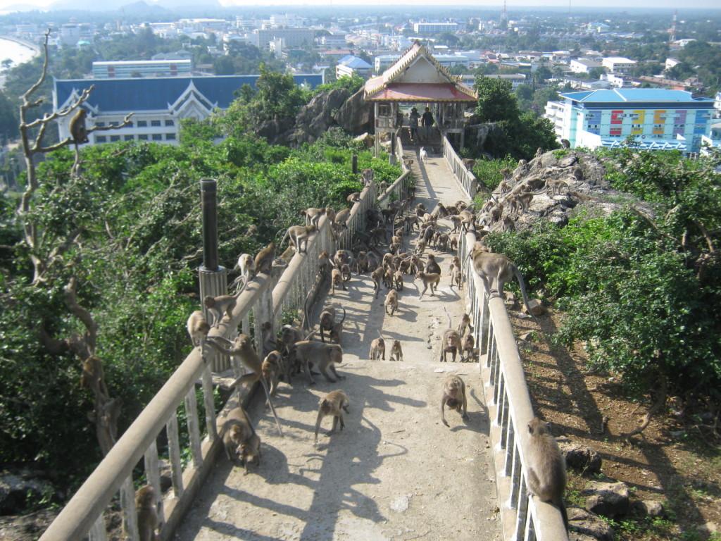 Prachuat K.K. Tempeltreppe mit Affen