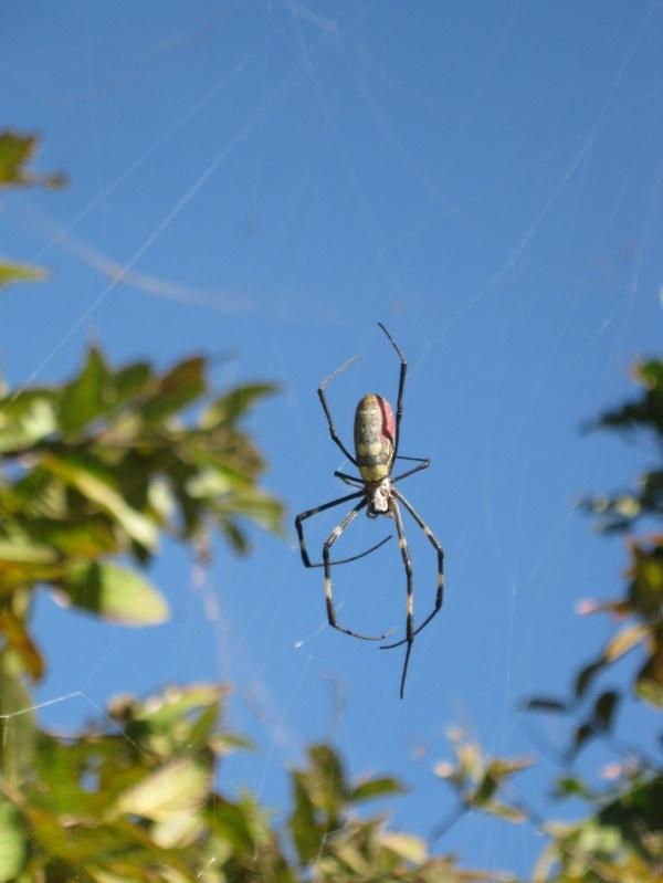 Spinne in Kalaw